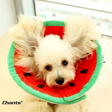 Load image into Gallery viewer, Pet Collar Dog/Cat Cone Protective Neck Medical Anti Bite  Sizes XS/S/M/L