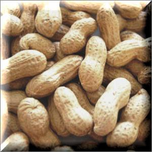Peanuts in the Shell, 20 lb.