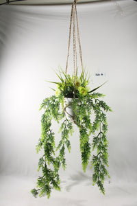 Hanging Rose Boxwood Macrame Plant