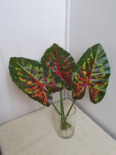 Load image into Gallery viewer, Caladium Leaves