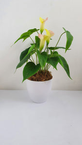 Artificial Calla Lily Arrangement