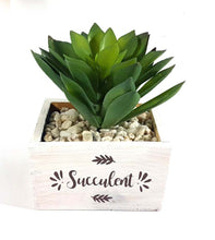 Load image into Gallery viewer, Succulent in Vase (Series 2)