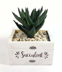 Succulent in Vase (Series 2)