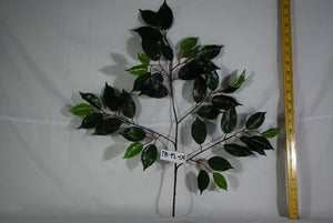 Ficus Leaves Spray