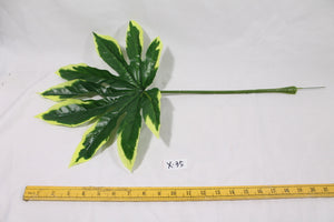 Fatsia Leaves