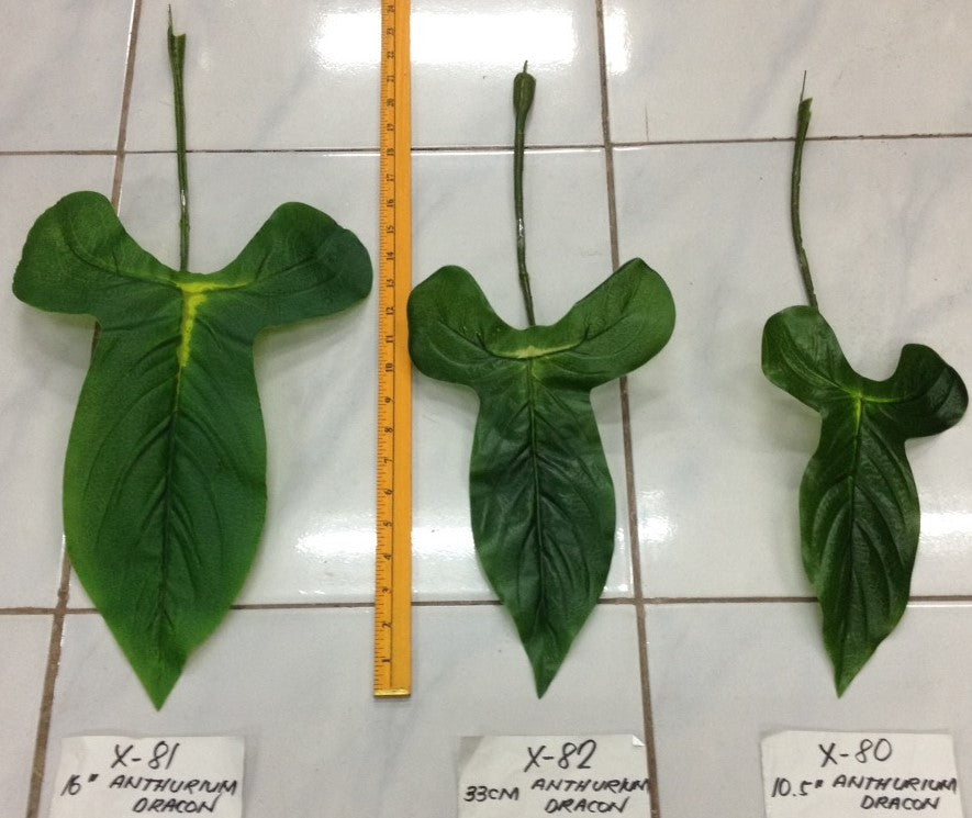 Anthurium Draco Leaves