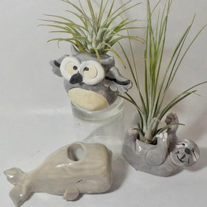 Air Plant Holder/Tooth Brush Holder
