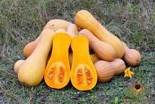 Load image into Gallery viewer, Waltham Butternut Squash
