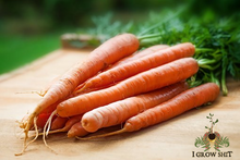 Load image into Gallery viewer, Organic Scarlet Nantes Carrot Seed
