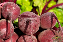 Load image into Gallery viewer, Organic Detroit Dark Red Beet Seed