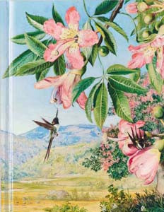 Kew Marianne North: Foliage And Flowers Of Chorisia Sketch Book (FTSB6