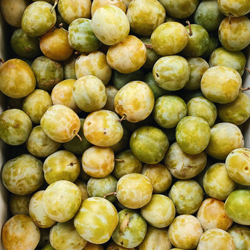 2 LB Pack Organic Green Gage Plums