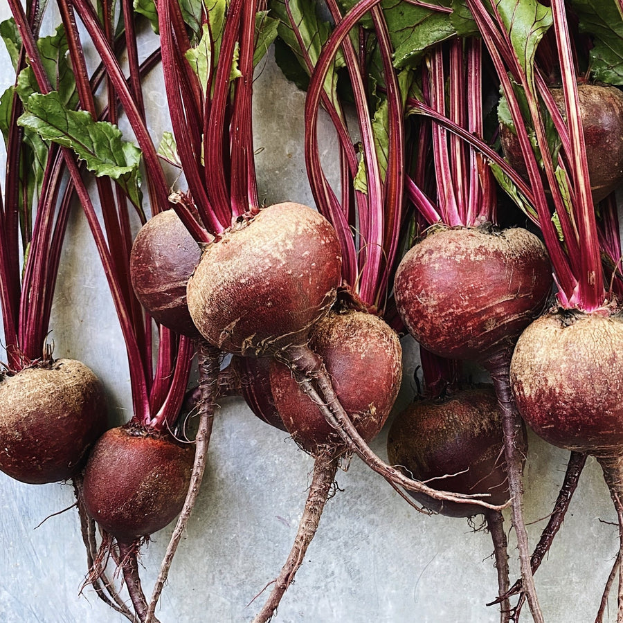 Bunch Beets