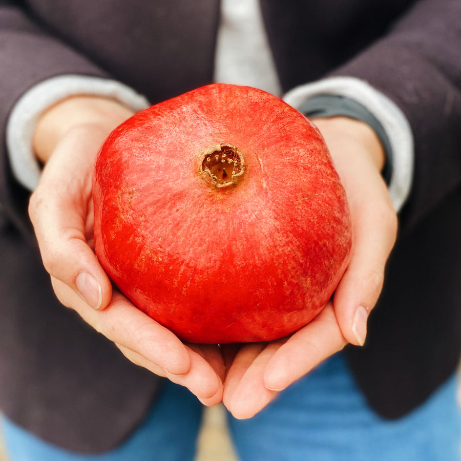 Large Pomegranate