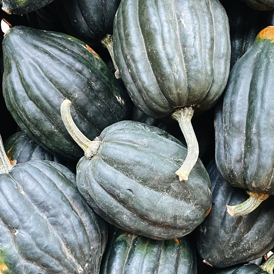 North Arm Farm Organic Acorn Squash