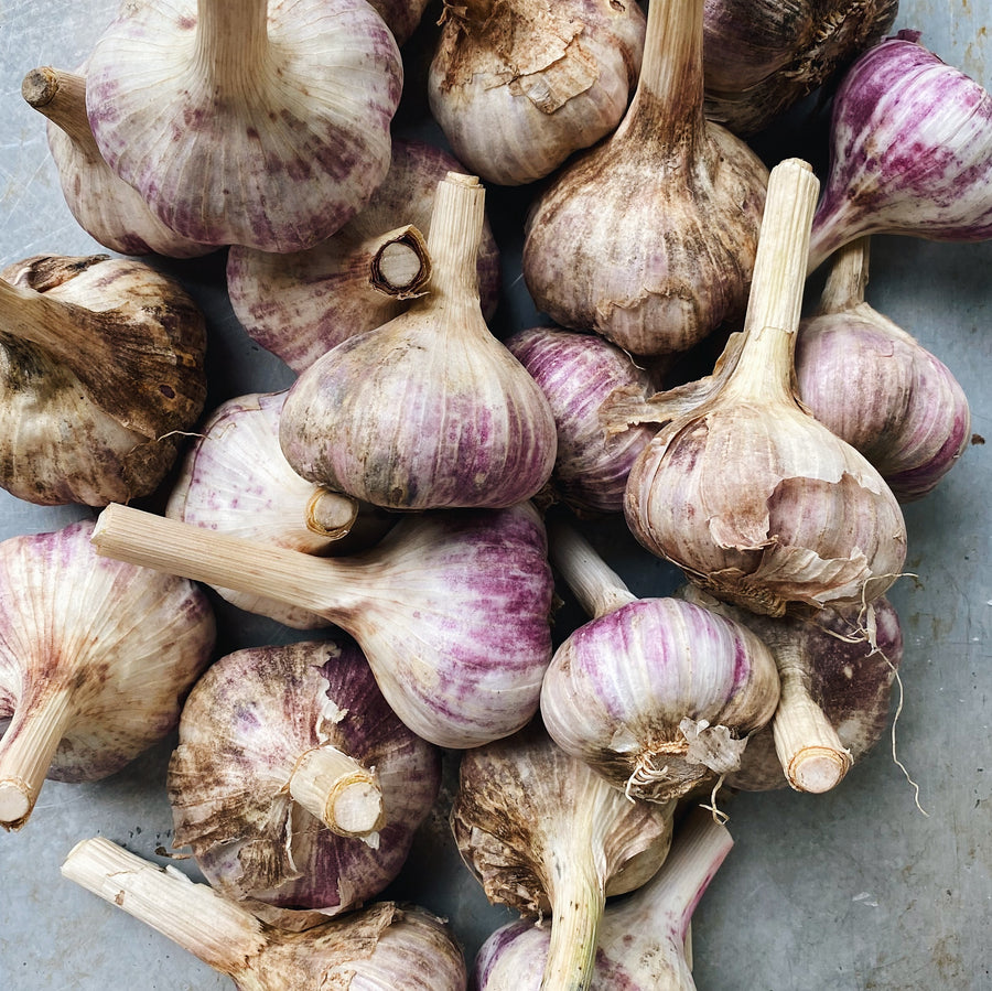 BC Grown Organic Garlic Bulbs