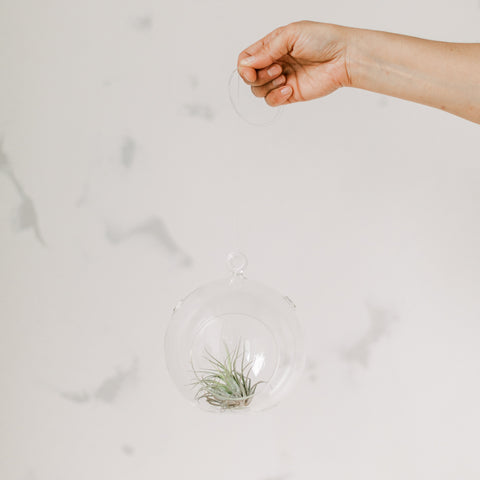 Air Plant in Glass Terrarium