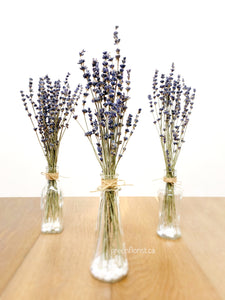 Dried Lavender Trio