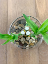 Load image into Gallery viewer, Lucky Bamboo fish bowl arrangement - Single