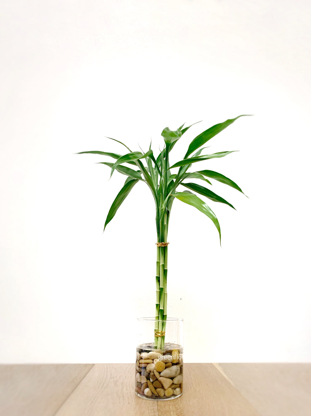 Lucky Bamboo arrangement 15""