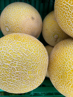 Organic Melon Galia - Square Farm Shop