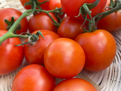 Organic Tomatoes - large - Square Farm Shop