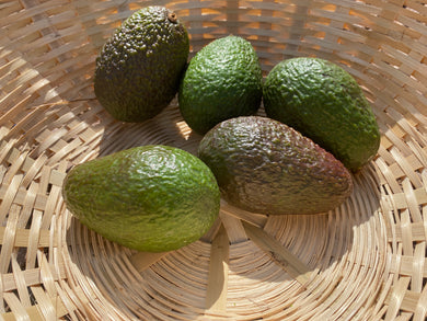 Organic Avocado - Square Farm Shop
