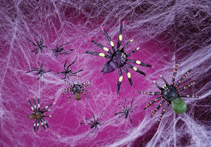Spooky Spiders & Web
