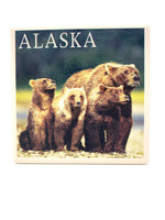 Grizzly Bear Cub Family Coaster
