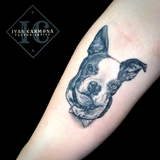 Pet Dog Portraiture Forearm Tattoo In Black And Gray Retrato De Perro, Tatuaje Antebrazo Negro Y Gris
