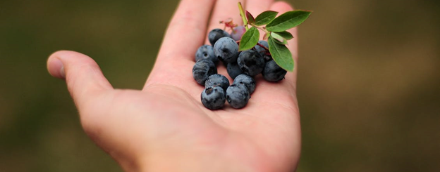 The Health Benefits of Blueberries and Antioxidant-Rich Foods