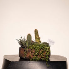 Load image into Gallery viewer, Rustic Succulent Arrangement