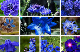 Blue bumblebee flower mix