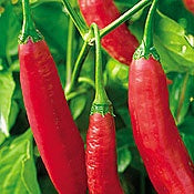 Aji Colorado-Peppers-Vegetables-Full Circle Seeds
