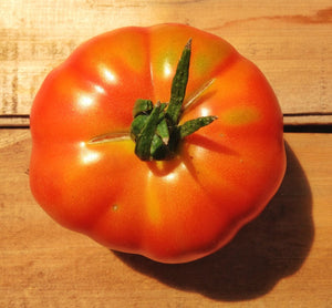 Aker's West Virginia-Tomatoes-Vegetables-Full Circle Seeds