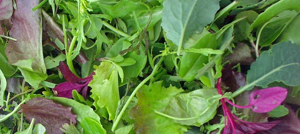All Weather Salad Blend-Salad Greens-Vegetables-Full Circle Seeds