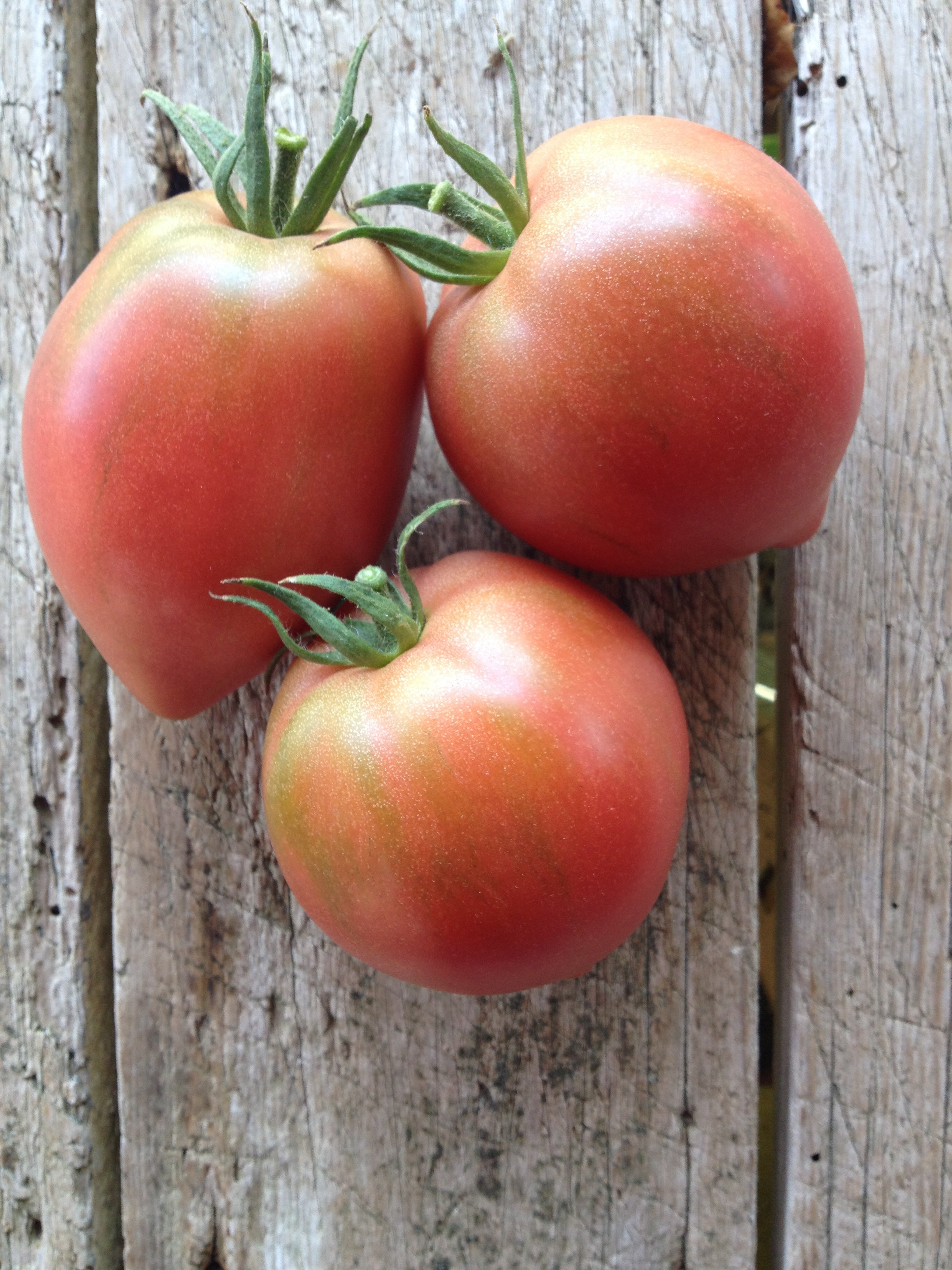 Anna Russian-Tomatoes-Vegetables-Full Circle Seeds