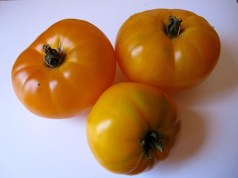 Azoychka-Tomatoes-Vegetables-Full Circle Seeds