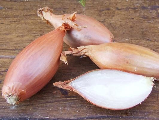 Banana Shallots-Shallots-Vegetables-Full Circle Seeds