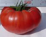 Brandywine-Tomatoes-Vegetables-Full Circle Seeds