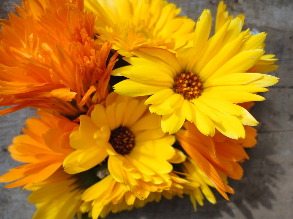 Calendula, ALM Special Mix-Flowers-Herbs-Full Circle Seeds