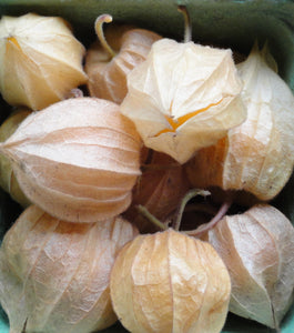 Cape Gooseberry-Unique Vegetables-Vegetables-Full Circle Seeds