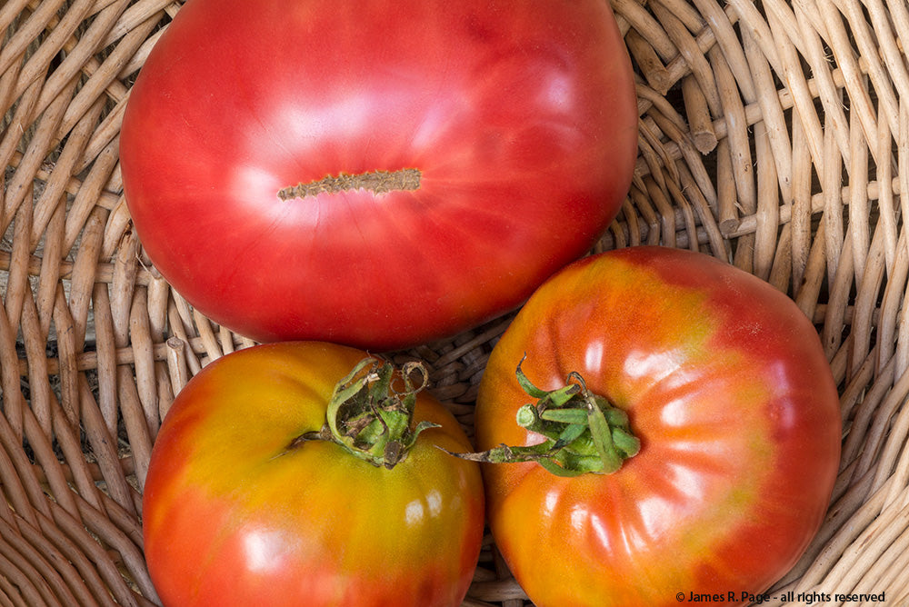 Caspian Pink-Tomatoes-Vegetables-Full Circle Seeds