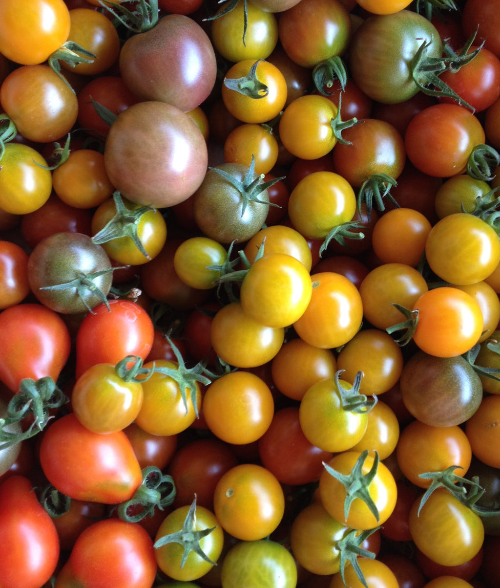 Cherry Tomato Mix-Tomatoes-Vegetables-Full Circle Seeds
