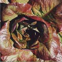Cimmaron - red, romaine-Lettuce-Vegetables-Full Circle Seeds