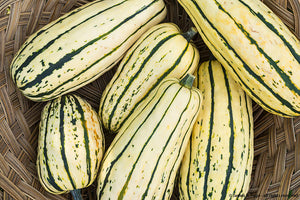 Delicata Squash-Winter Squash-Vegetables-Full Circle Seeds