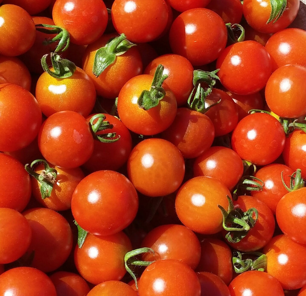 Gardener's Delight-Tomatoes-Vegetables-Full Circle Seeds