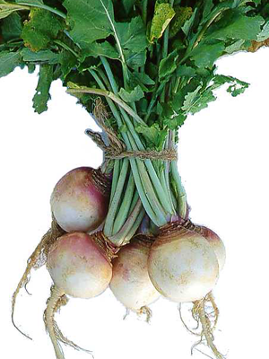 Harris Turnips-Turnips-Vegetables-Full Circle Seeds