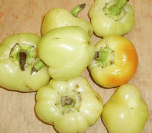 Hot Apple-Peppers-Vegetables-Full Circle Seeds