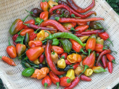 Some Like it Hot! Hot Pepper Collection-Peppers-Vegetables-Full Circle Seeds